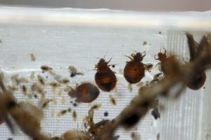 How To Move Homes Without Bedbugs? Find Here!