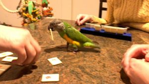 Can You Board a Parrot?
