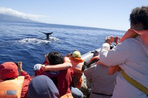 Whale Watching Australia – Why are Humpbacks so Popular?